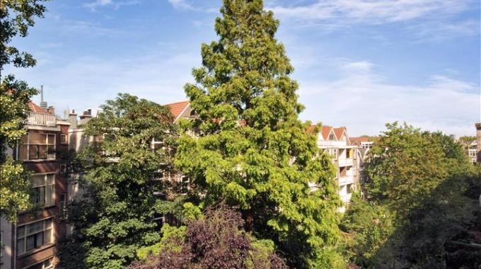 We moeten zuinig zijn op onze stadsbomen