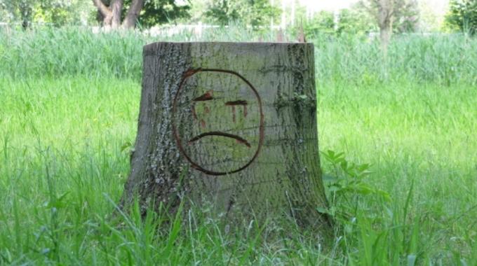 Rotterdam wil kapvergunning bomen gedeeltelijk afschaffen