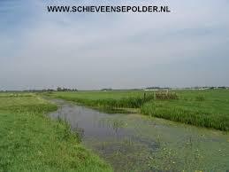 Schieveensepolder.nl