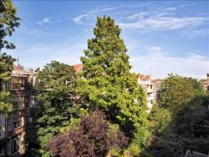 Stadsbomen.1