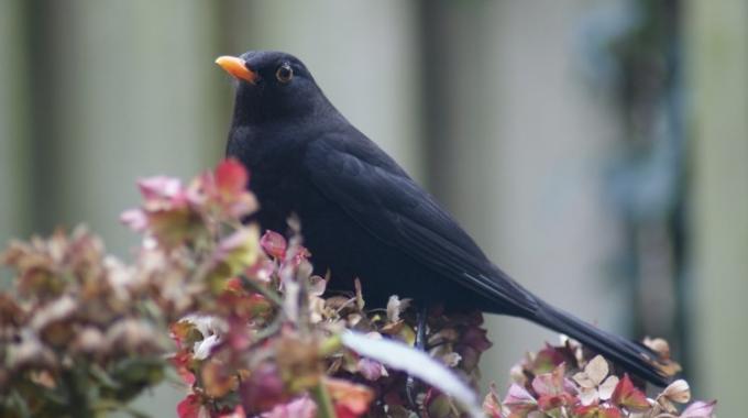 Stadsvogeladviseur & tuinvogelconsulent