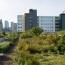 De nieuwe groene daken subsidie 'te plat' en 'te krap'